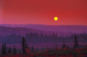 Dolly_sods_sjs_up_medium