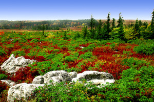 Dollysods-def-005_up-2_medium