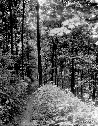 Forestmonongahela_nat_forest_trail_up_standard