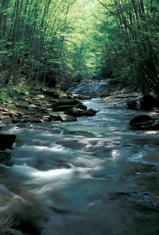 Seneca_creek__pendleton_co253