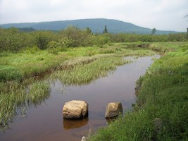 Blackwater_river_canaan_valley_resort_state_park_medium