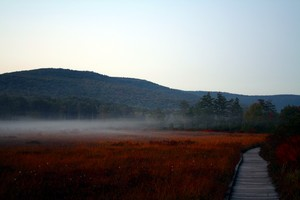 Cranberry-glades-fog-1_medium