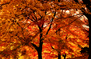 Fall_trees_def_medium