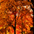Fall_trees_def_sq